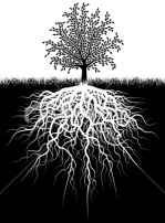 67170-roots