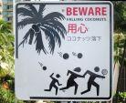 Beware Falling Coconuts sign