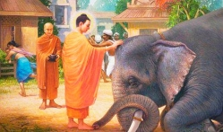 Buddha and elephant nalagiri