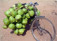 Coconuts on a bike