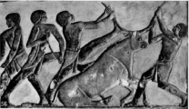 egyptian bull sacrifice