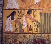 Egyptian harvest