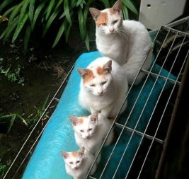 Family Resemblance of Cats