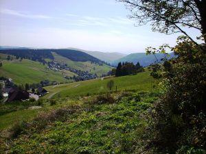 Heidegger's cabin view