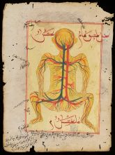 Ottoman diagram of arteries and veins