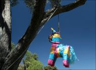 Piñata Hanging in a tree