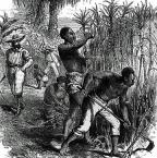 plantation slave labor