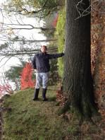 tree sideways illusion