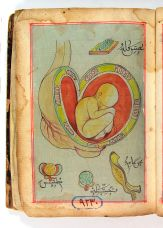 turkish-ottoman-baby-in-womb
