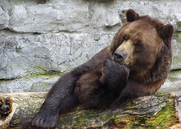 bear in thought