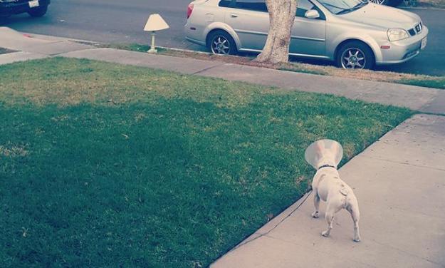 dog and lamp