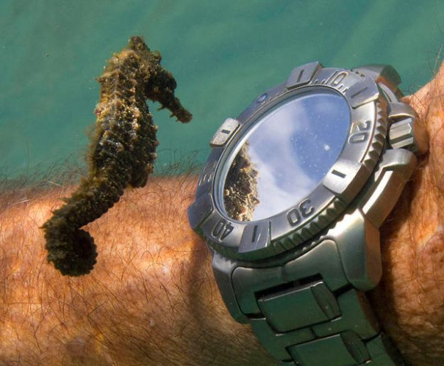 Seahorse Checks the Time