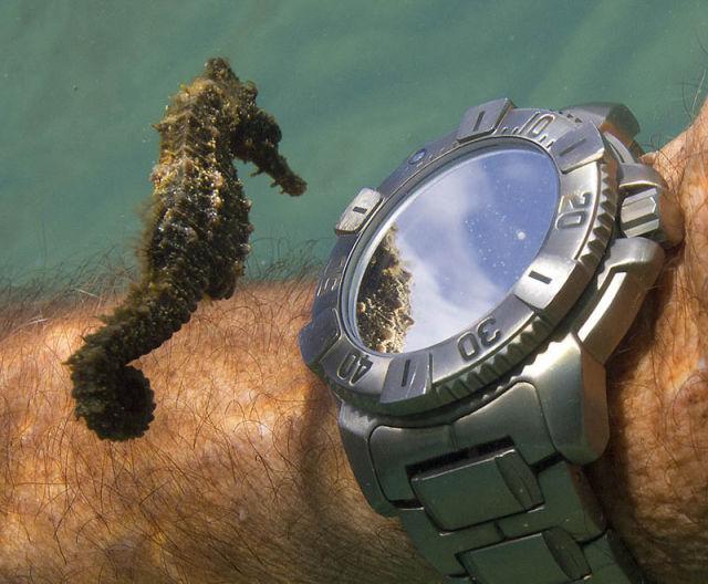 Seahorse Checks the Time