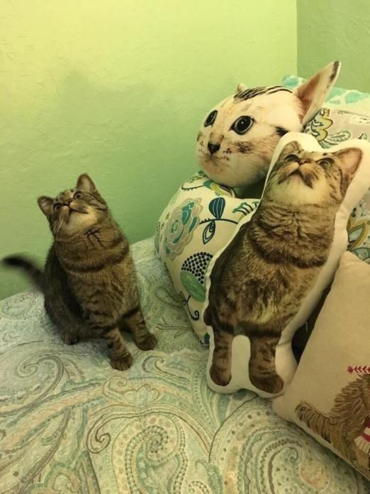 hyperreal cat pillow