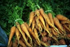carrots in bundles