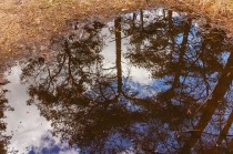 puddle reflection