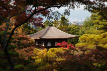 japanese zen temple peeking