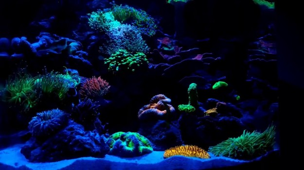 coral at night.jpg